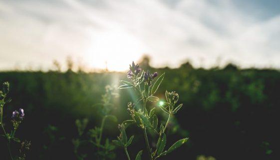 close-up-view-dawn-field-1167355-1000x500
